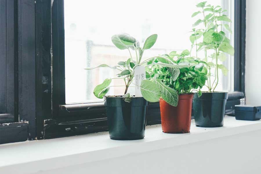 Plants by a window